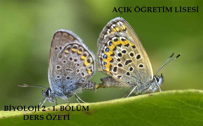 AÖL Biyoloji 2